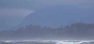 Beautiful sadness was the first thing I thought when I lined up this shot (Tofino)