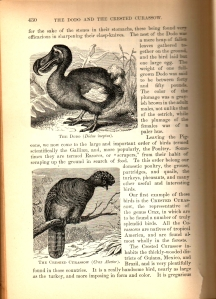 Who's the dodo now, eh?