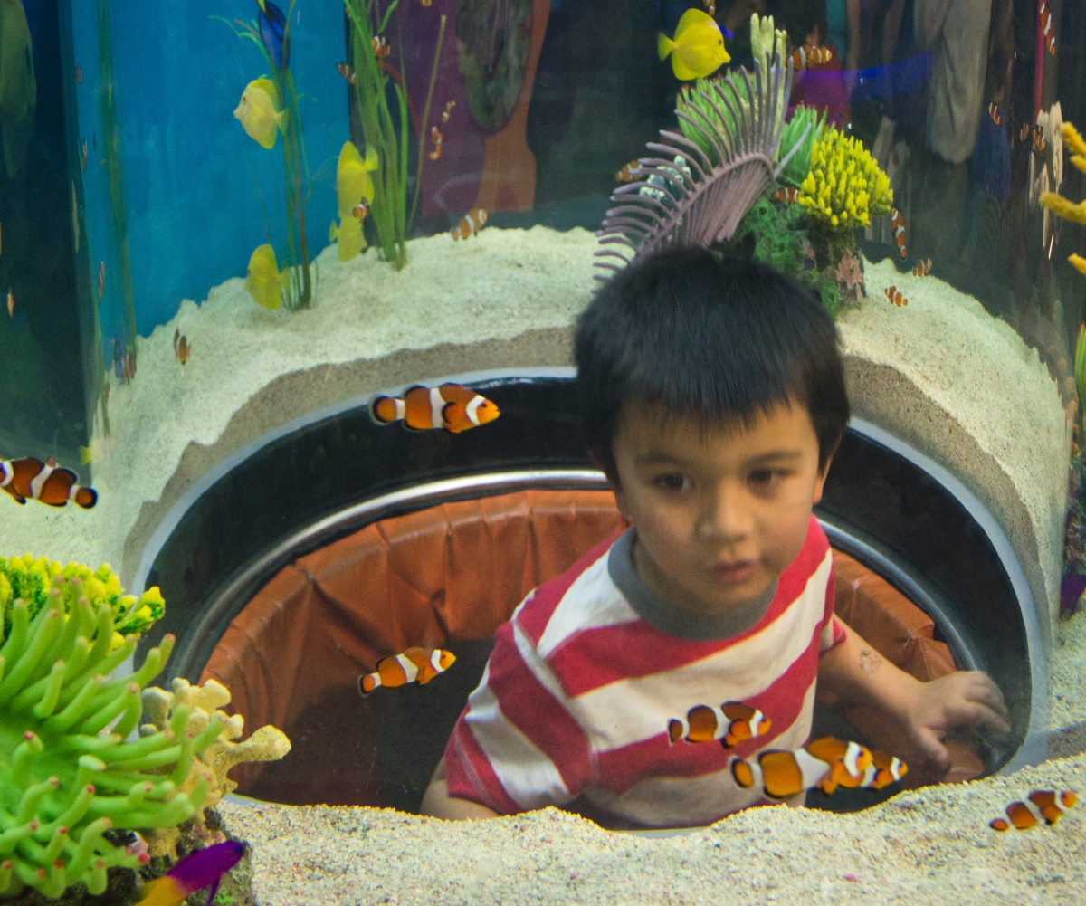 A young visitor clowns around with the fish