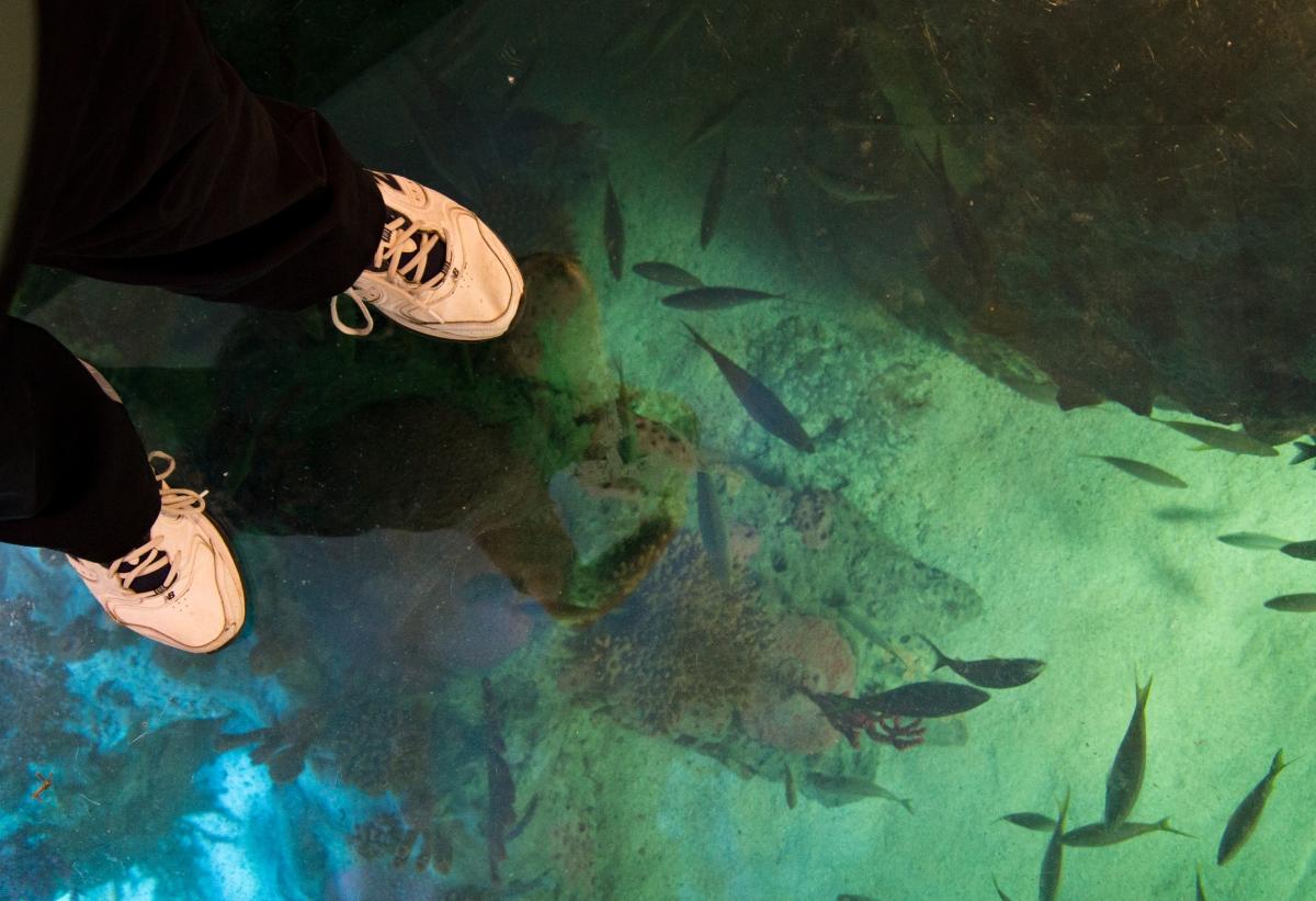 Intrepid photographer makes on step for Plexiglas-kind