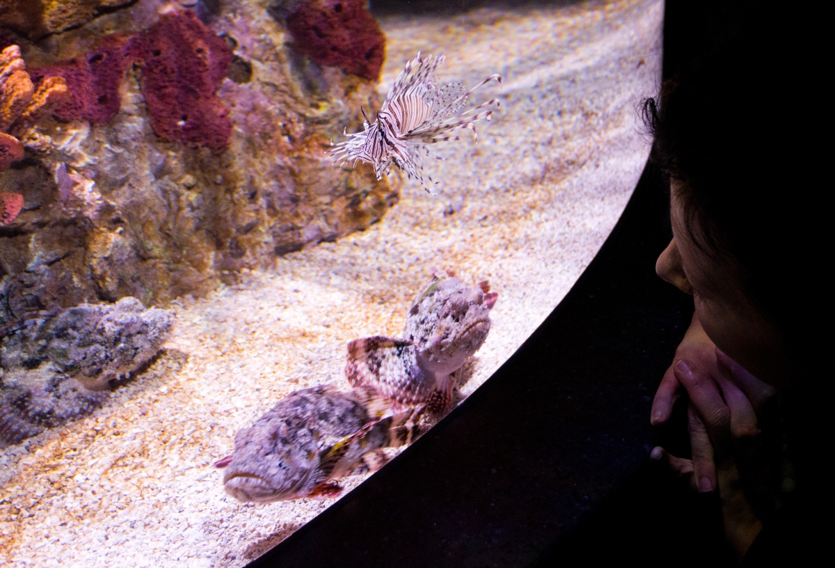 Who is on display, as Leela stares down a lionfish and several stonefish