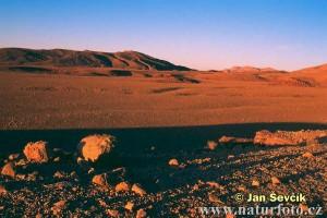 morning-in-the-desert--rano-v-pousti