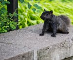Squirrels are like pigeons with fur in Toronto...but cuter