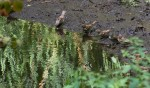 Birds are blurry, but I was after the ripple effect