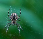 Spiders may be less pretty from the victim side of the picture
