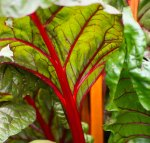 Not just for breakfast, rhubarb forms a colourful display
