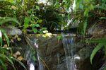 Arboretum falls