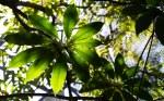 Arboretum shadows