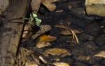 Mired mantis