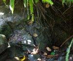 Arboretum web