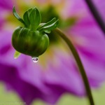 Purple droplet