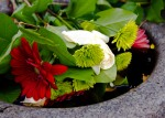 Flowers slowly drown in a water-filled commemorative font