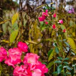 Colourful blooms refuse the onslaught of autumn's cold and darkness