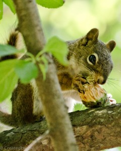 Squirrel watches me while chowing down